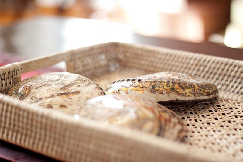 sea shells in a basket